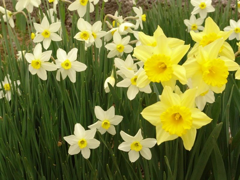 Pomlad prihaja z velikimi koraki.